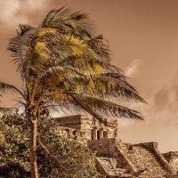 ..О чём шепчет ветер в кронах пальм.. :: Slava Sh