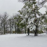 Зимний пейзаж :: Юрий Стародубцев