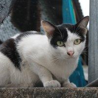 Street cat :: Elena Ageeva