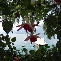 Женевское озеро :: Sasha Berg