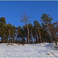 В зимний солнечный денёк :: Татьяна Кретова