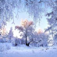 зимним  воздухои  можно не только дышать, но и пить! :: Valentina Lujbimova [lotos 5]