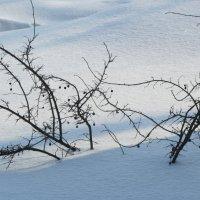 зимний этюд :: tgtyjdrf