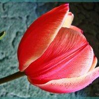 Весенний подарок :: Лидия (naum.lidiya)
