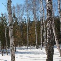 Зимний лес 3 :: victor Lion