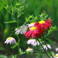 бабочка :: эдуард syabaev