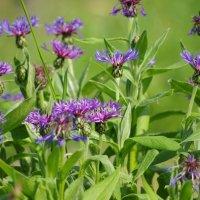 Цветы :: Jeanne B