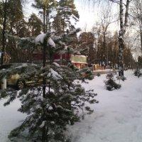 Однажды январской дорогой в Томилино.... :: Ольга Кривых