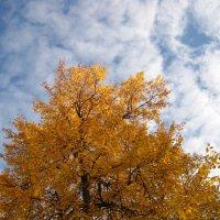 Осеннее краски :: Елена Семигина
