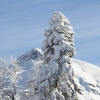 Зимний пейзаж. :: Weskym Markova