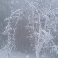 Туман зимой. :: Weskym Markova
