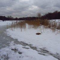 Когда повеет вдруг весною в январе - IMG_0369 :: Андрей Лукьянов