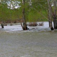 наводнение :: lev
