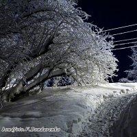 Серебро :: Виктор Бондаренко