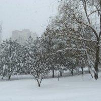 В снегопад :: Natali