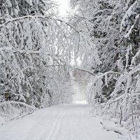 Сказка зимнего леса :: Татьяна Петранова