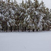 Зима :: Юрий Стародубцев
