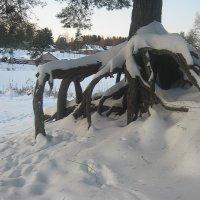 Снежный осьминожка... :: Tatiana Markova