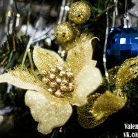 Новогодние цветы :: Valentina Zaytseva