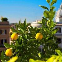 Солнечная осень в Риме :: Tatiana _ Z
