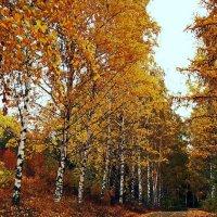 Осень золотая :: Алексей Дмитриев