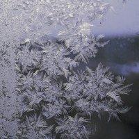 Мои первые снежинки на стекле :: Нина северянка