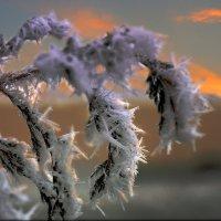 закатные штрихи зимой холодной... :: Lena