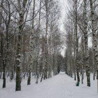 Зима :: Алёна Савина