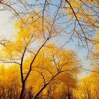 Зимняя осень. :: aWa