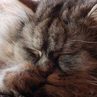 Кот думает... :: Саша Коломийчук