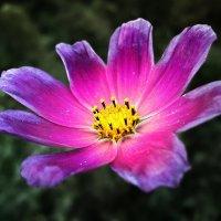 Аленький цветочек :: Mike214
