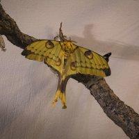 Тропическая бабочка :: Aнна Зарубина