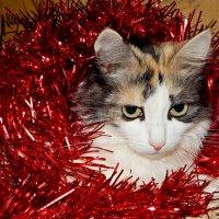 Вот и праздники закончились...(( :: Milocs Морозова Людмила