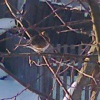 Птичка :: Любовь Игнатова