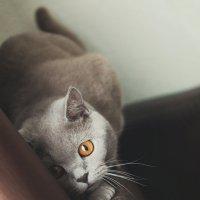 На  охоте :: Екатерина Тырышкина