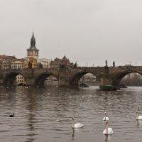 Лебеди :: Дарья Мерзлякова