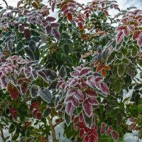 Зимняя листва :: Константин Бобинский