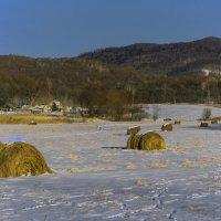 Запасы на зиму :: Жанетта Буланкина