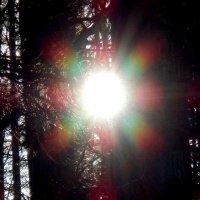 Сквозь деревья :: rimgis