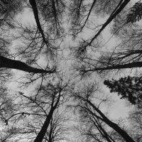 Небо :: Илья Попов