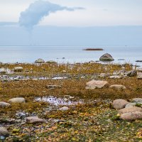 Берег залива :: Tatyana Smit