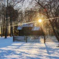 Солнечное утро зимы :: Елизавета Вавилова