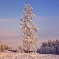 Добрый подарок Зимы. :: Валентина Налетова