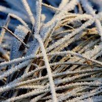 Закружило  зимы  круговертью... :: Валерия  Полещикова