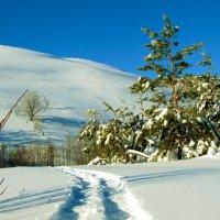 Лыжня :: Константин Филякин