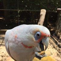 Вкусно! Сиднейский зоопарк. :: Люда Валяшки