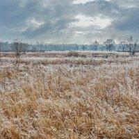 Зимнее  поле. :: Валера39 Василевский.