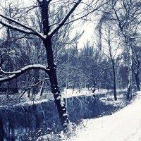 Зима :: Любовь Шатура