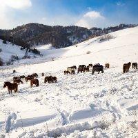 В горах Алтая :: Юрий Сименяк