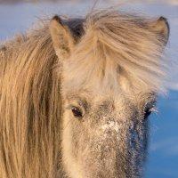 Портреты лошадей :: Михаил Потапов
